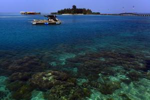 terumbu-karang-pulau-tidung 3