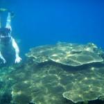 pulau-tidung-snorkeling-terumbu-karang
