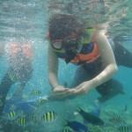 snorkeling-terumbu-karang-pulau-tidung